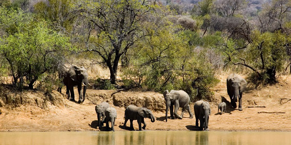 transport-to-Pilanesberg-Game-Reserve